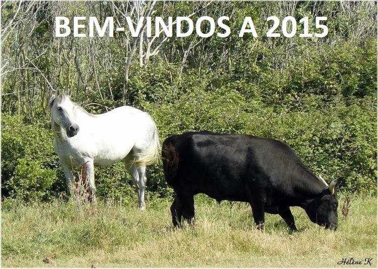 1461085_733020963378665_1760368714_n[2] BEMM-VINDO
