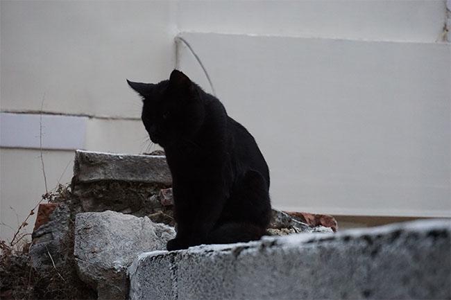 schwarz katze_split